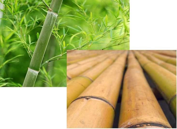 پاورپوینت بررسی تثبیت و تورم خاك رس گرگان توسط گیاه بامبو