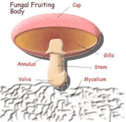 پاورپوینت طرح پرورش قارچ خوراکی